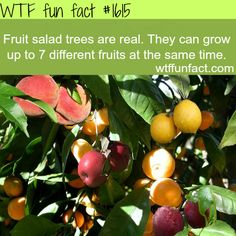 Fruit salad trees, AMAZING! - Where can I get one & what care do they need?