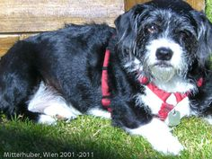 MITTERHUBERS 2001 - 2011 Dogs, Animals, Animales, Animaux, Pet Dogs, Doggies, Animal, Dog, Animais