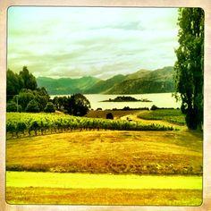 Rippon Vineyard, Wanaka, NZ Kiwiana, Vineyard, Mountains, Nature, Summer, Travel, Outdoor, Vine Yard, Outdoors