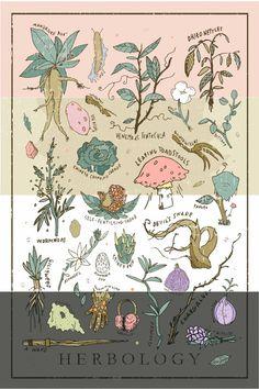 Harry Potter Herbology Print / Plakat 12 x von WellSaidCreations