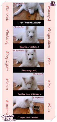 Veja o #vídeo da nossa #Samoieda Misty no Instagram (https://instagram.com/p/1dDwcJyfjj/?taken-by=corujinhalulu) e acompanhe mais posts dela e do gatinho Rafi no blog CorujinhaLulu.com #Samoyed #Dog #Pets