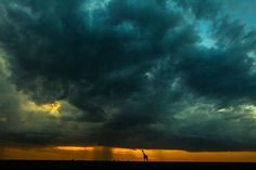 Sunsets of Masai Mara in Paul Goldsteins Photography