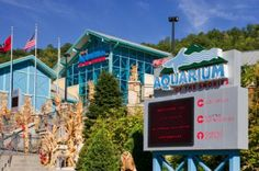 New Exhibit at Ripley's Aquarium Brings SLIME to the Smokies - Click to read more! #SLIME