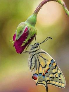 Moth Caterpillar Erfly Photos Flowers Wings Kisses