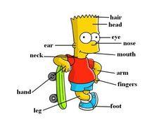 Basic English Vocabulary 2  ~Body Parts~