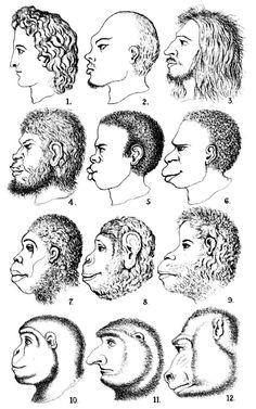 Ernst Haeckel - Illustrations - Evolution de l'homme - 1868