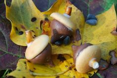 Fall Snack Chocolate Acorns