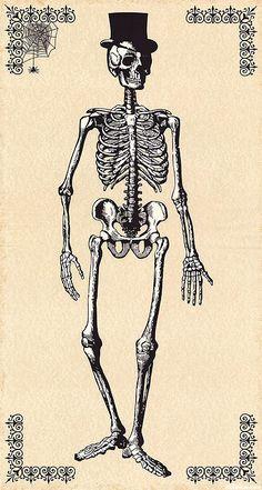 """Chillingsworth - Dapper Skeleton - Cream - 24"""" x 44"""" PANEL"""