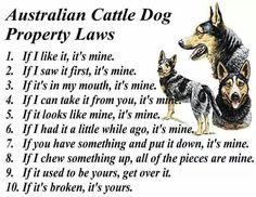 Australian Cattle Dog Property Laws