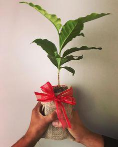 O Café Fontenelle representa um olhar sustentável para o futuro. Há um mundo a ser explorado e nosso papel é contribuir para deixá-lo melhor do que encontramos.  #cafefontenelle #sustainability #sustentabilidade #mundomelhor #betterworld #bye2017hello2018 #tchau2017olá2018 # # #