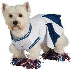 This dog cheerleader costume is perfect for #Halloween, football season, or any time your pooch feels like showing off her tricks!