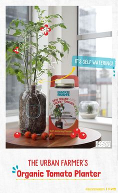 Some kind of self watering indoor gardening kit for lazy people! Some kind of self watering indoor g Backyard Aquaponics, Aquaponics Fish, Aquaponics System, Hydroponic Gardening, Container Gardening, Organic Gardening, Indoor Gardening, Gardening Tips, Growing Cherry Tomatoes