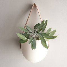 I just ordered 3 of these for our bathroom-perfect way to maximize the skylight and add some greenery!