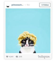 Nouvel article sur le blog ! Un #lolcat trognon et hyper esthétique ! Tks @princesscheeto #printshop #printstudio #photoprint #polaroid #cat http://ift.tt/29iDlJj