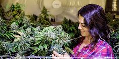 9 reasons why women are so important for the cannabis industry http://greenflowermedia.com/article/9-reasons-women-are-important-for-cannabis/?utm_campaign=crowdfire&utm_content=crowdfire&utm_medium=social&utm_source=pinterest