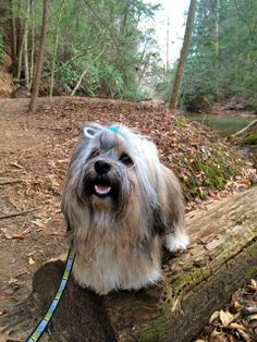 To Dog With Love: Hiking with Dogs at Dawson Forest Wildcat Creek Trail
