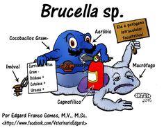Brucella sp.