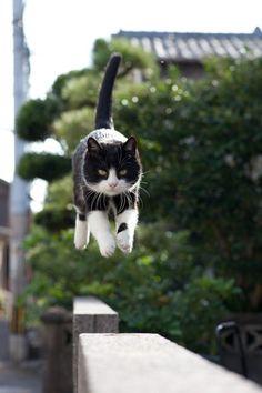 (443) 「animal☆kids☆smile」おしゃれまとめの人気アイデア|Pinterest |Rie Olympia | Pinterest | 猫、子猫、ニューロン