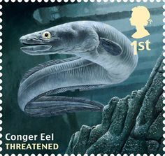 Undated handout photo issued by Royal Mail from their Sustainable Fish Special Stamps issue showing a Conger Eel.