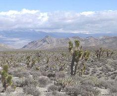 La ciudad de Las Vegas se encuentra en medio de desérticos paisajes, aquellos que han inspirado cientos de historias del género #Western.