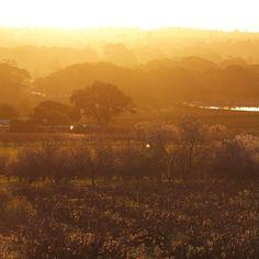 Vineyards, orchards, rolling hills... scene at Bethany tonight... #Barossa #BarossaDirt #BarossaValley #Bethany #SouthAustralia #Australia #nofilter #sunset #view #vineyard. Image by @BarossaDirt on Instagram.