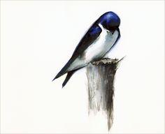 Content Bird Art by amberalexander on Etsy Watercolor Bird, Watercolor Animals, Watercolor Paintings, Original Paintings, Hanging Art, Bird Prints, Bird Art, Traditional Art, Fine Art Paper
