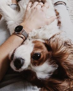 Amikor a stílus és a cukiság megfér egy képen. Puppies And Kitties, Cute Puppies, Pet Dogs, Dog Cat, Doggies, King Charles Dog, King Charles Spaniel, Cavalier King Charles, Beautiful Dogs