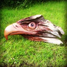 Eagle head made from cedar driftwood by Joshua Blewett. It looks small, but it's big!