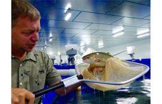 The future of fish