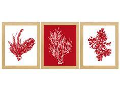 Antique Illustration Deep Red Sea Coral Print Set