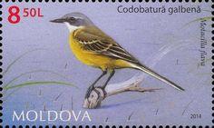 Stamp: Western Yellow Wagtail (Motacilla flava) (Moldova) (Fauna of Moldova) Mi:MD 888