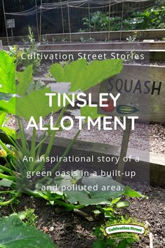 Cultivation Street Story Tinsley Allotment An inspirational story of a green oasis in a built-up and polluted area Garden Projects, Garden Ideas, Orange Plant, Winter Crops, Planting Plan, Forest Garden, Replant, Meeting New Friends, Allotment