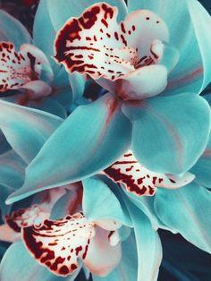 Orchids Flowers Garden Love