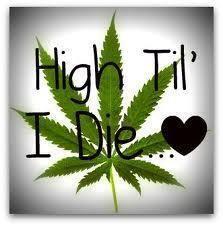 High till I die - marijuana
