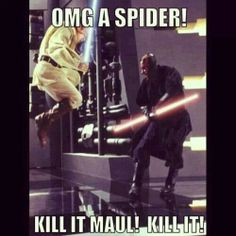 Omg a spider!