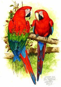 130 Ideas De Os Arte De Aves Pinturas De Aves Aves Tropicales