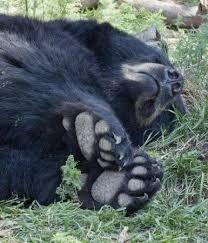 Image result for sleeping bear