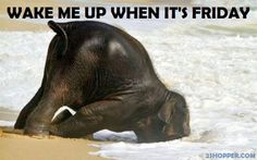 elephants on mondays