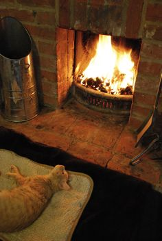 Kitty by the fire animals cat fire autumn warm cozy log Crazy Cat Lady, Crazy Cats, Perth, Cozy Fireplace, Cottage Fireplace, Light My Fire, Warm And Cozy, Snuggles, Dog Cat