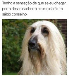 Lq sabiruria xdxdxd Lq sabiruria xdxdxd Lq sabiruria xdxdxd The post Lq sabiruria xdxdxd appeared first on Hair Styles. Top Memes, Best Memes, Funny Moments, Funny Cute, Funny Photos, Animals And Pets, Dog Cat, Jokes, Instagram Posts