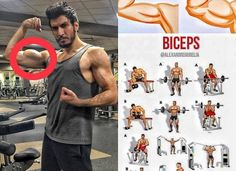 biceps exercises