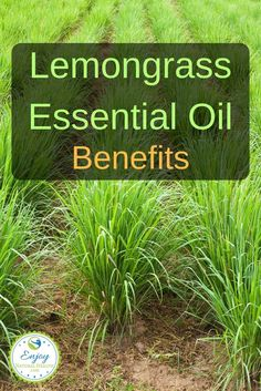 Lemongrass Essential Oil Benefits Here are just a few of the many benefits of lemongrass oil you should know about. Essential Oil Diffuser, Essential Oil Blends, Essential Oils, Lemon Benefits, Coconut Health Benefits, Oil Benefits, Coconut Oil For Acne, Coconut Oil Uses, Doterra