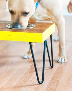 DIY Pet Food Station