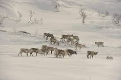 Image result for nature winter pictures