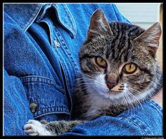 my cat  by Giancarlo Gallo