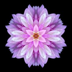 Violet Dahlia - This looks like it could be a fantasy flower, it's so gorgeous!