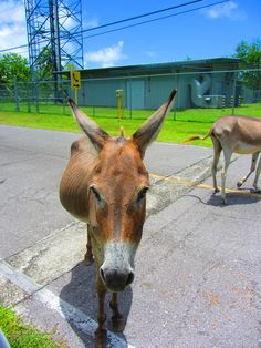 I was out of carrots. Navy Day, Diego Garcia, British Indian Ocean Territory, Military Personnel, United States Navy, The Other Side, Travel Abroad, Donkey, Far Away