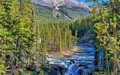 Sunwapta Falls, Parque Nacional Jasper, Alberta, Canadá, árboles Fondos Fotos Imágenes