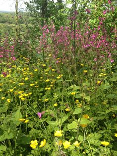 Buttercups, red campion and foxgloves flood the paths we've opened in our woods, only a short walk away from our holiday carriages in St Germans, Cornwall Bird Tables, Insect Hotel, Earthworms, Holiday Accommodation, Wildlife Nature, Cornwall, Paths, Woodland, Woods