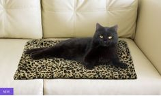 Super warm cozy pet bed @ Groupon for a great price. Beat the winter blues.